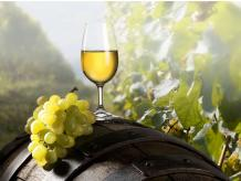 11% OFF - VINEYARD EXPERIENCE TOUR, TASTING & TAPAS FOR TWO